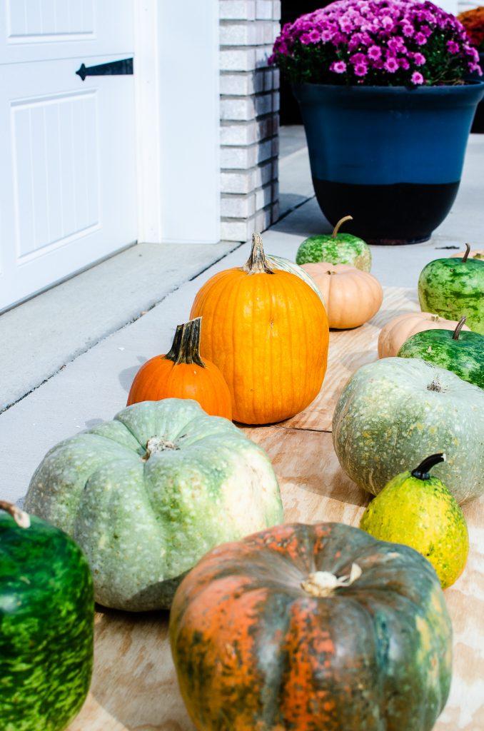 pumpkins on driveway